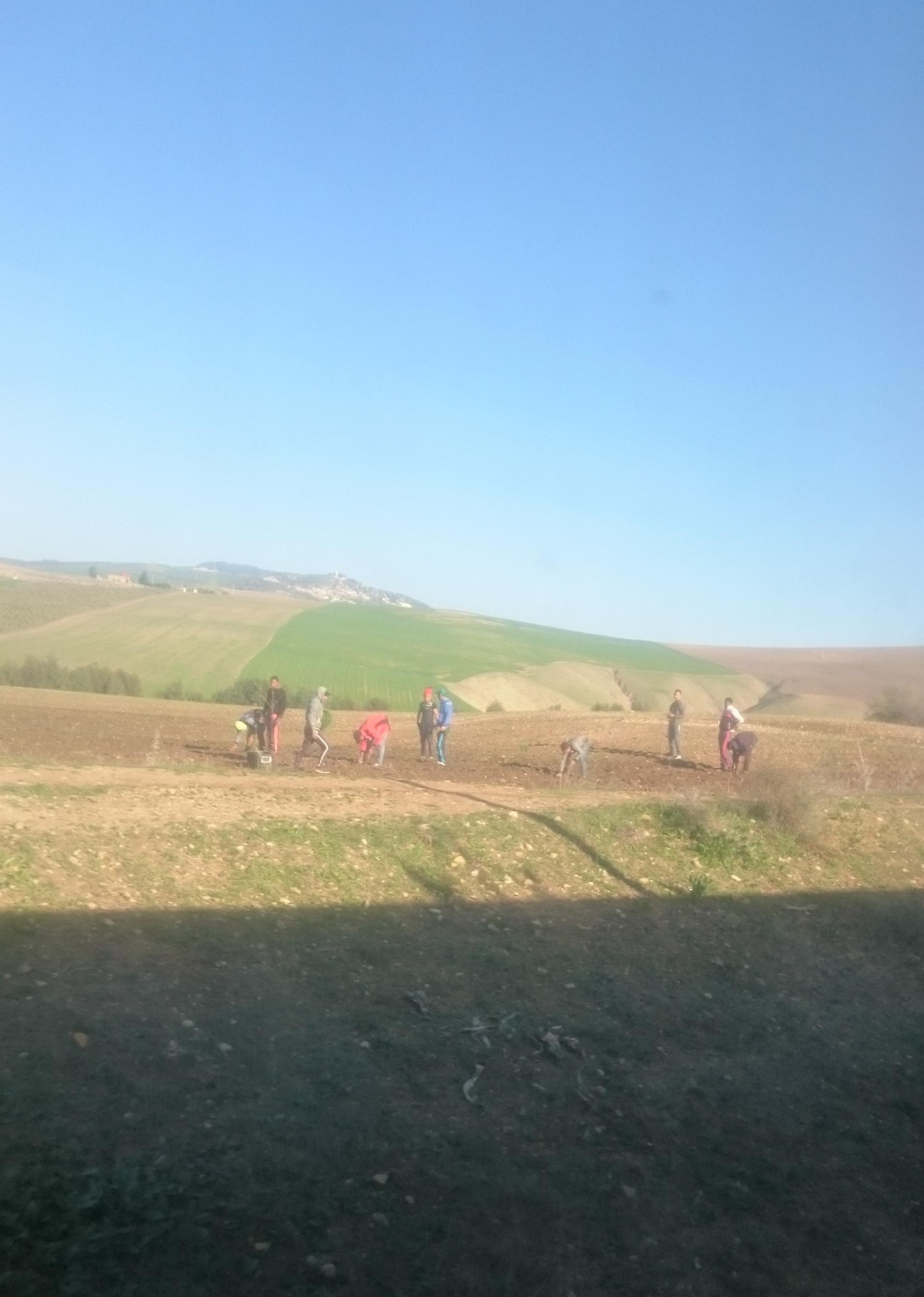 Bauern auf einem Feld zupfen Unkraut