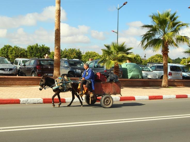 Der Berber-Porsche in Marokko. Ein Esel zieht einen Karren